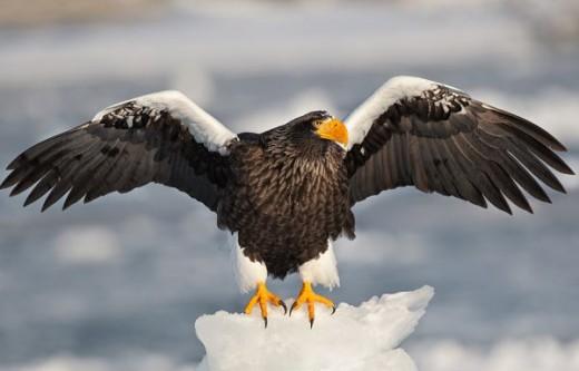 Sometimes Loki was an Eagle