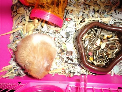 Momma Hamster