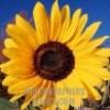 CountryWoman1 profile image