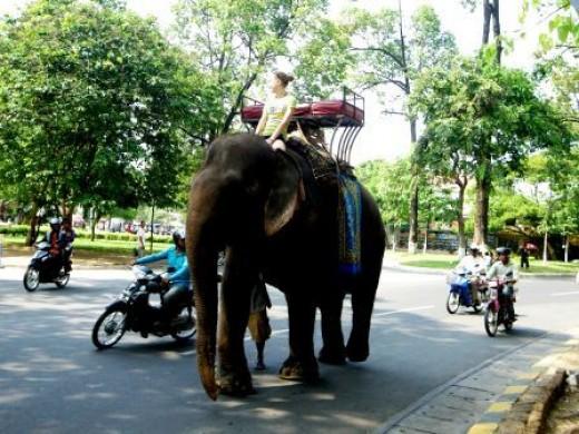 Sambo in Wat Phnom Park