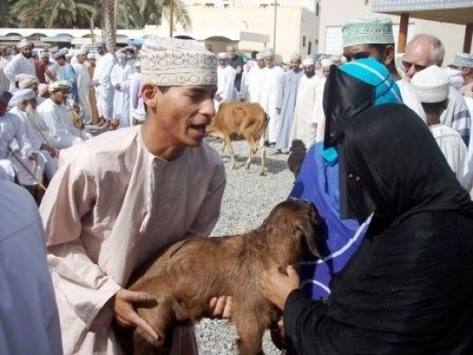 Oman women choosing a goat to buy