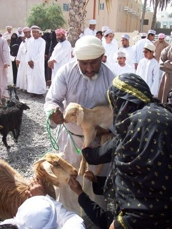 An Omani woman examining the goat she wants to buy.