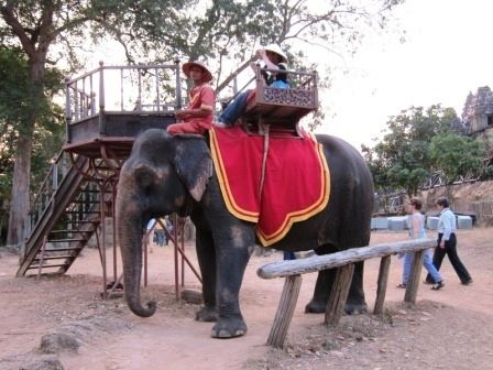 More tourists taking an elephant ride