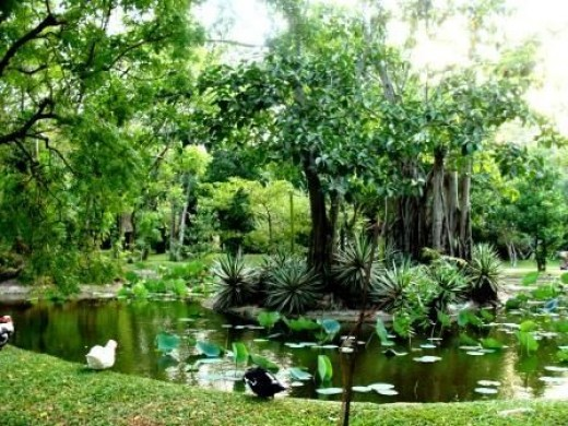 The pond around the Sigiriya fortress