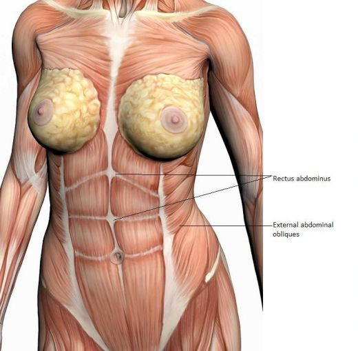 Woman's abdominal muscles