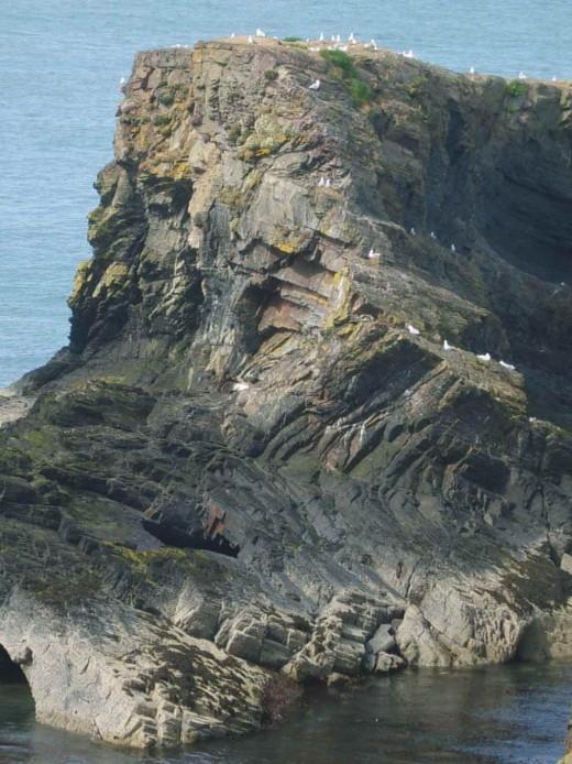 folded slate Cardigan Bay - Ordovician