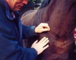 Equine Acupuncture Vet