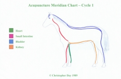 Meridian charts - horse (first cycle acc. C. Day)