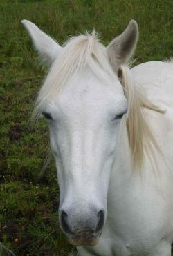 Horse dozing