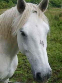 Head Shaking in Horses