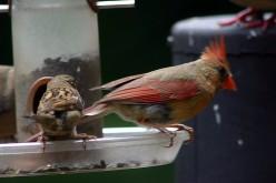 Cardinal deedsphotos