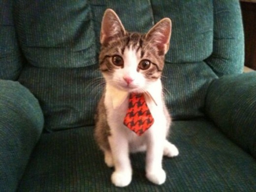 Does this tie match my fur?