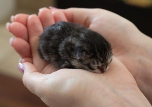 Kitten 2.0: even more cuteness, all in the palm of your hand