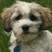 puppypics profile image