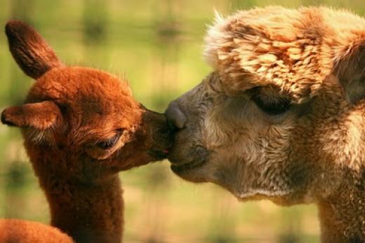 Give me a kiss!Photo credit animalszooguru.blogspot.nl