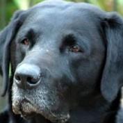 werebear profile image