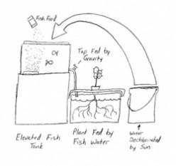 Build an Aquaponic Garden