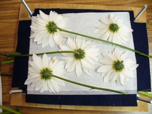 Here is a second layer of flowers I've laid out.