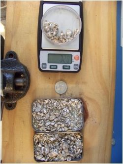 weighing silver, metals studio, jewelry studio, raw silver, troy ounce of silver,