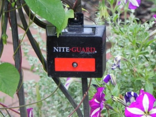 How I Saved my Garden Best Deer Deterrent Ever hubpages