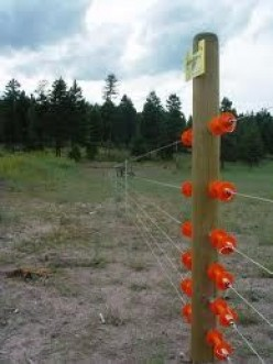 The Electric Fence