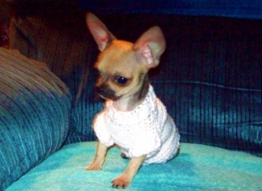 Rosie's first sweater I made for her.