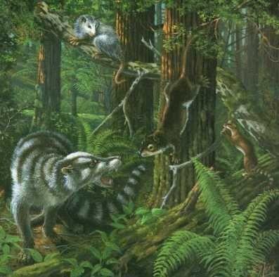 Cenozoic Era Mammalia