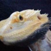 redflea13 lm profile image
