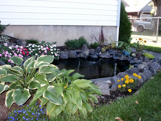 Small Fish Pond