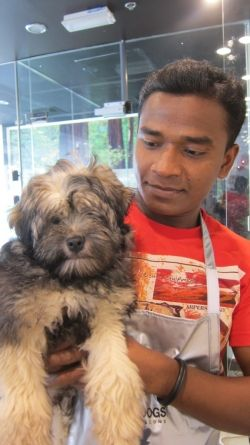 Grooming at Pampered Pets