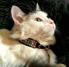 Rhinestone Cat Collars