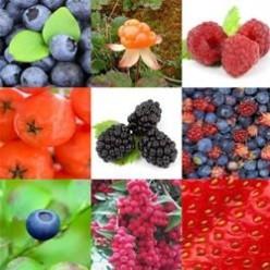 Berries from around the world