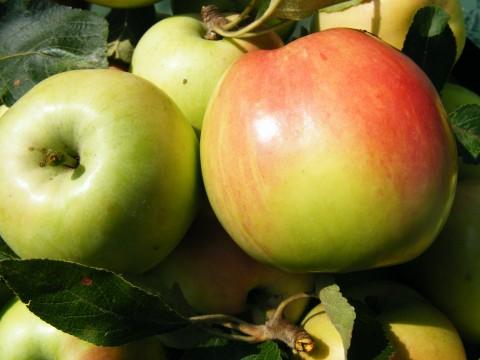 green apples public domain