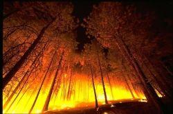 fire public domain