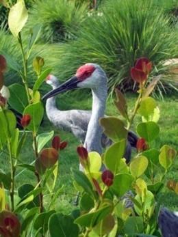 Crane photo taken at SeaWorld - Orlando, Florida