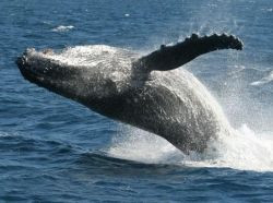See whales at Fraser Island