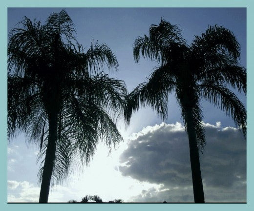 Our lovely sky and palms at dusk