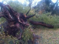 Hurricane Sandy left behind her mark