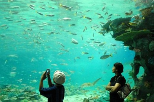 "The Manila Ocean Park Oceanarium promises a ""deeper experience"" as it features an assortment of colorful fishes and invertebrates indigenous to the Philippines and Southeast Asia contained in 12,000 cubic meters of seawater."