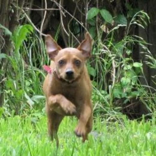 Athena running