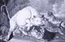 Bull-Baiting