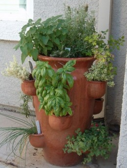 Herbs in Strawberry Planter