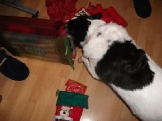 Jetta at Christmas