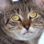 gestyr profile image