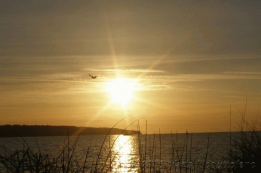 "Sunsets are lovely at English Bay, the perfect way to finish your day. This photo is called ""Flight by the Sunset"""