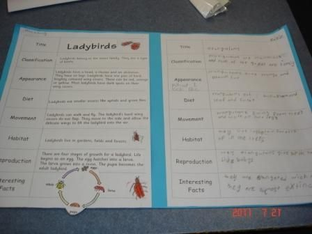 After sorting a simple information report on ladybirds, students in Grade 1/2 were able to write their own reports on orangutans.