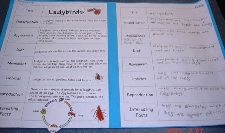 Grade 1/2 students sorted a simple information report on liady birds, then used the same format to write their own report on orangutans.