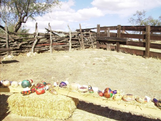 This corral now holds pumpkins and goards instead of horses and cows.