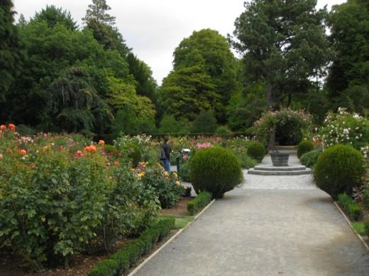 Rose Garden, Christchurch Botanical Gardens