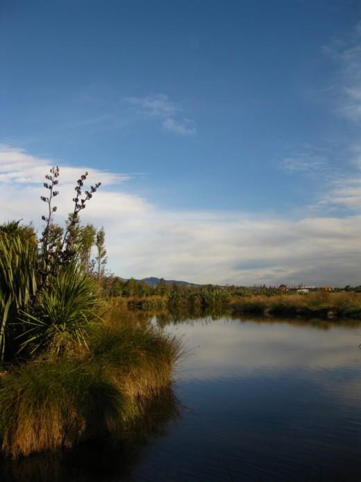 View across Travis Wetland, Christchurch, New Zealand